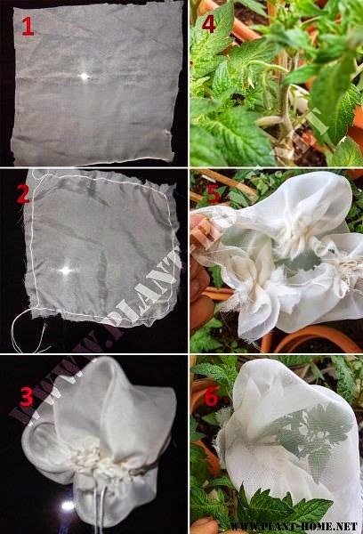Domates Çiçek tozlaşma önleme