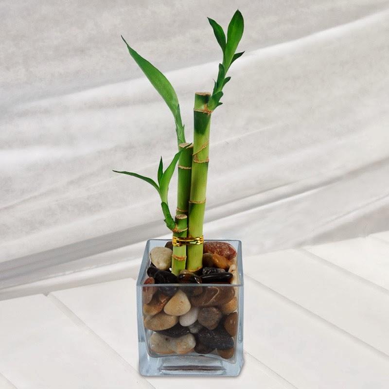 Bambu – Bamboo