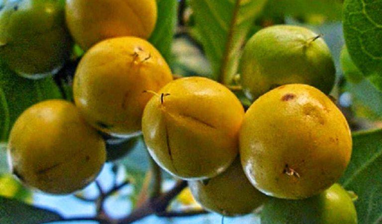 Tropikal Egzotik Meyveler A'dan Z'ye Bütün Meyveler