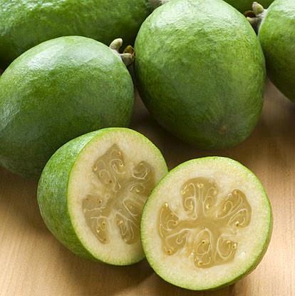 Kaymak ağacı (Feijoa sellowiana), mersingiller (Myrtaceae) familyasından bir bitki türü. Brezilya, Paraguay, Uruguay ve Arjantin ana vatanıdır. Meyvesi yeşil renktedir.