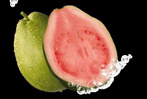 Guava (Guava Ağacı)