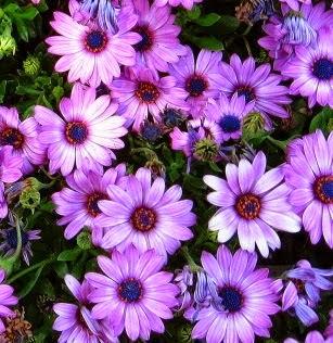 Çiçekler ve Özellikleri