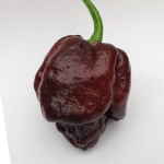 Moruga-Scorpion-Chocolate