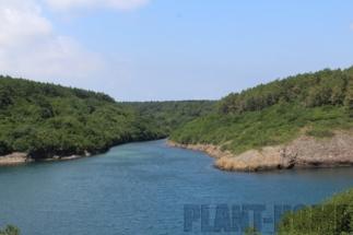 Karadeniz_Sinop_hamsilos_koyu1-min
