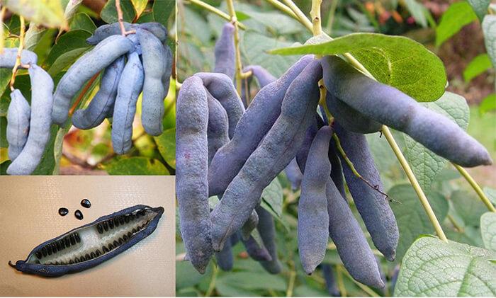 Ölü Adamın Parmakları – İlginç Bitkiler